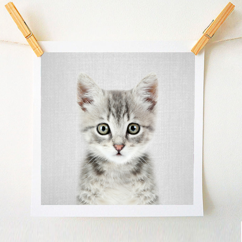 Kitten - Colorful - original print by Gal Design